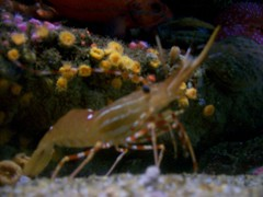 shrimpies (axellrose00) Tags: family vacation aquarium monterey carmel