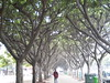 Beautiful tree lined walkway in th…