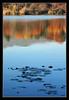 Autumn Reflections (matt :-)) Tags: lake reflection leaves foglie reflections lago leaf foglia mattia riflessi riflesso 80200mmf28d sartirana nikond80 consonni flickrclassique mattiaconsonni