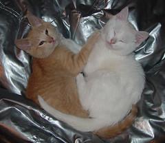 Anya and Ptera--awwww!