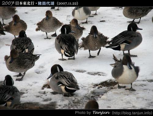 豬苗代湖@2007日本東北行