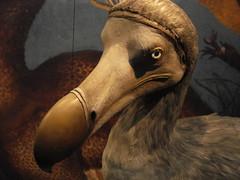 The Way of the Dodo