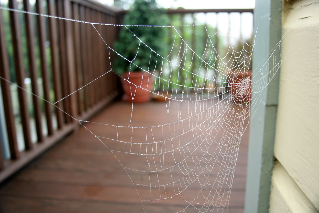 Spiders Web Deck _20071107_9_1