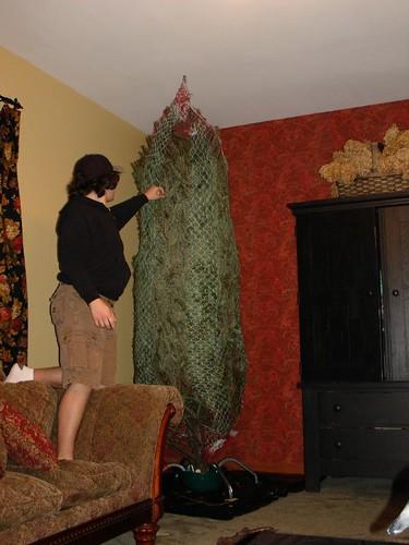 Bundled Christmas tree