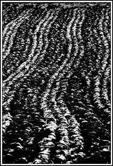 waiting for spring (~shrewd~) Tags: bw white black water field canon eos austria see blackwhite sterreich wasser noir 300d pattern herbst feld stack pile repetition sw schwarzweiss teich plowing weiss blanc muster schwarz canoneos300d steiermark acre kirchberg styria acker fische stapel  fischteich wiederholung pflgen