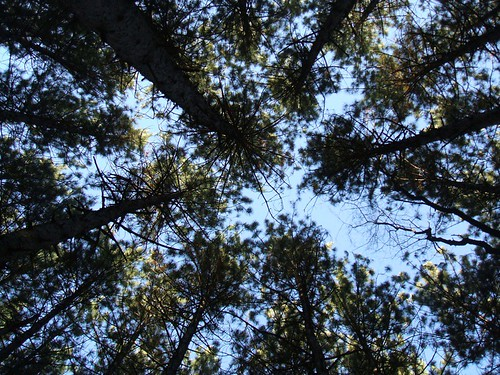 Lying on my back in the woods
