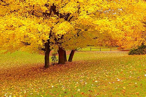 جمال وروعة تساقط اوراق الشجر في الخريف... 2122370556_ff244b60d