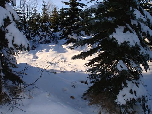 Noch mehr Schnee im Wald