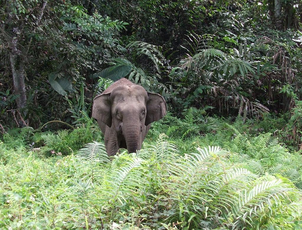 angry elephant2