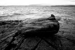 Found (johnivara) Tags: wood sea bw norway driftwood shore ingierstrand svaberg drivved