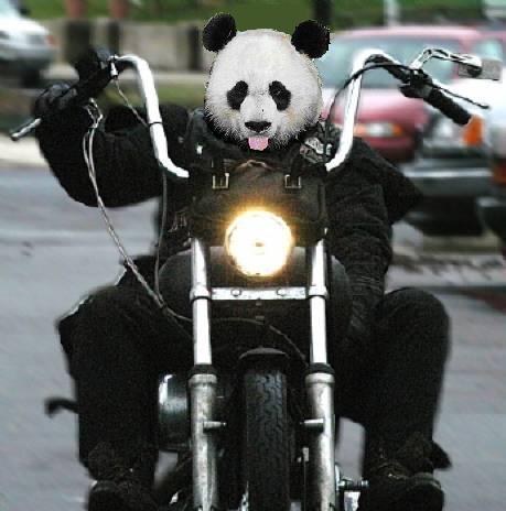 Pandas: Unshakeable
