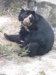 This is just so wrong... (Jill Rachel) Tags: bear penis zoo dick shy syracuse blackbear syracuseny rosamondgiffordzoo jillrachelphotography beardick