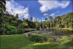 Brisbane Botanical Garden
