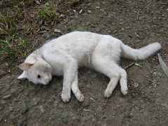 dead kitty under window (ilexxx) Tags: pet cats pets white animal animals cat fur dead death kitten kitty atrest bung