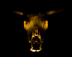 Zip The Light Fantastic (Cayusa) Tags: lightpainting skull cow 10 ten bones bone zippy cowskull cwd explored interestingness166 i500 week69 tacwd takeaclasswithdavedave tacwdd cwdexplore 2cwdrs 3cwdrs cwdrs cwd691 3cwdrs69 cwdrs69 2cwdrs69 explore13may08