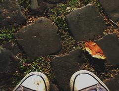 a piedi per roma (Ulderica) Tags: roma feet erba converse foglia sanpietrini piedi allstars scarpe camminare