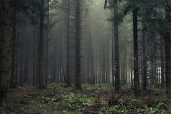 In the Woods (Netsrak (on/off)) Tags: forst natur nebel wald fog forest mist nature woods eifel tree trees baum bäume