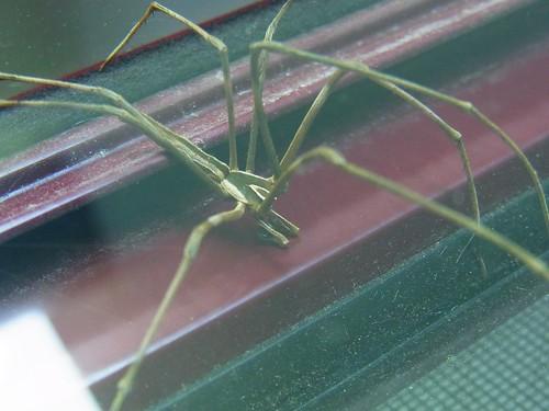Spider 2of3