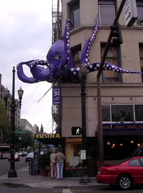 octopus_103107