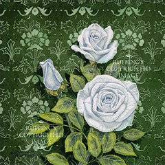 """Innocence"" Art Nouveau Watercolor White Roses by Elizabeth Ruffing"