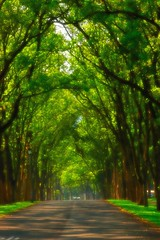 Green tunnel (Matthew Fang) Tags: morning tree green nature d50 nikon image sweet taiwan tunnel 105 soe hdr nantou  naturesfinest  firsttheearth infinestyle