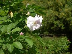 ortobotanico 136 (blum1) Tags: alberi fiori piante ortobotanico