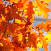 L'autunno, secondo me
