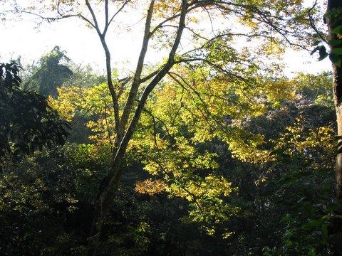 fall colours in Nandi Hills...