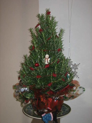 2007-12-09_01_rosemary_xmas_tree