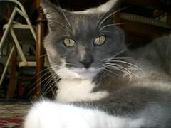 Jinx (dipdewdog) Tags: cat december jinx 2007
