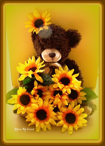 Sweet Teddy holding Daisy's for you by tumbleweed1937~Carol~.