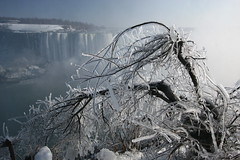 Frozen trees at Niagara Falls (Davoud D.) Tags: blue white mist snow ontario canada cold tree ice niagarafalls frozen waterfall branches freezing niagara falls horseshoefalls frozentree icetree nstantfave llovemypic