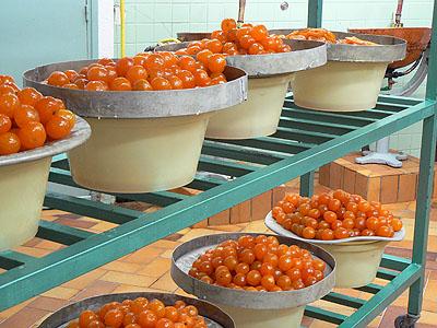 clementines confites en pots.jpg