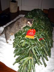 Eva checks out tree
