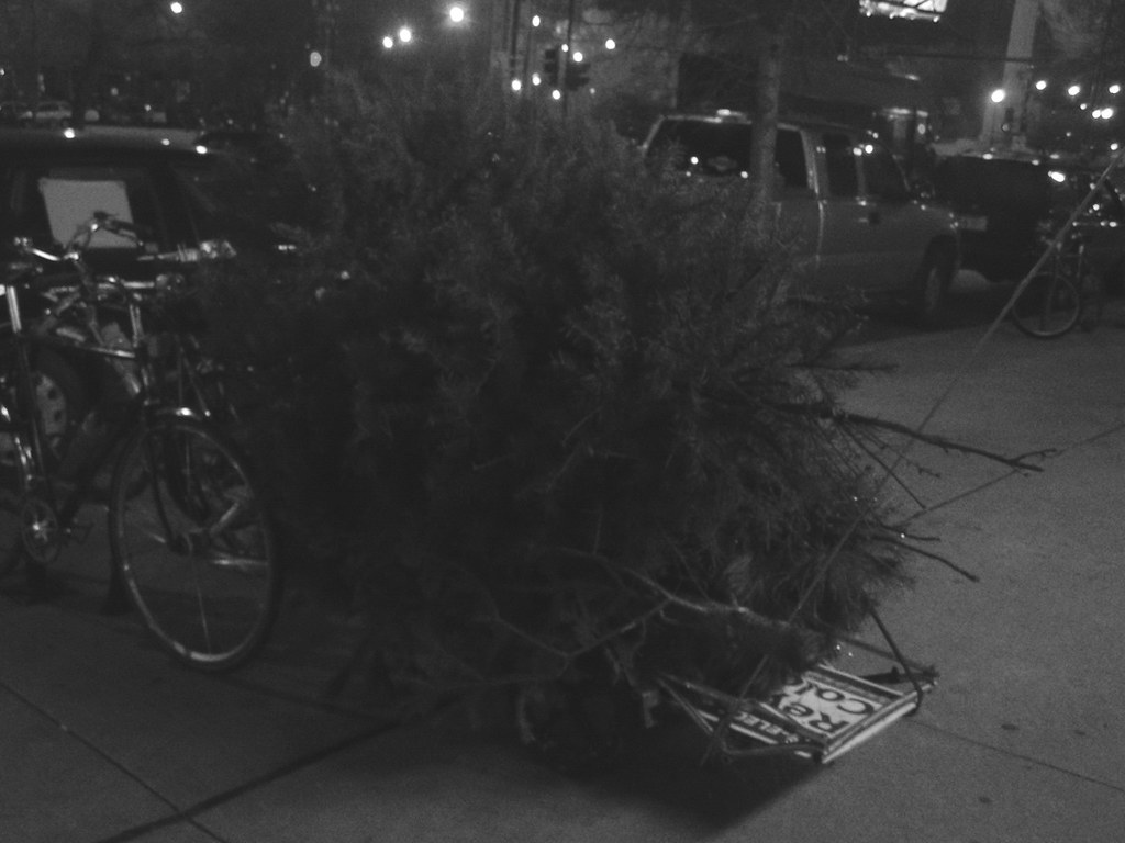 DAY 9: this tree seems pretty hard to transport