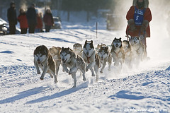 Mushing_7062 (akphotograph.com) Tags: dog alaska searchthebest racing mushing sleds akphotographcom