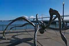 Crouching Spider, detail (Eric Hunt.) Tags: sanfrancisco california sculpture art water skyline architecture skyscraper bay baybridge embarcadero highrise sanfranciscobay suspensionbridge louisebourgeois pier14 crouchingspider