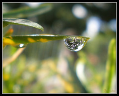 Reflex (bermudes) Tags: macro gua reflex waterdrop flickr drop explore gota reflexo reflaction