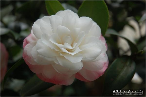 DSC_7229Sawada's Dream夢(八美園)