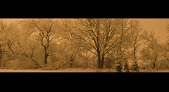 orange balance (Adam FLiK) Tags: trees winter orange white snow cinema adam nature night forest landscape backyard nikon branches wide panoramic format tamron f28 d1x 2875mm mywinners diamondclassphotographer flickrdiamond flikkema