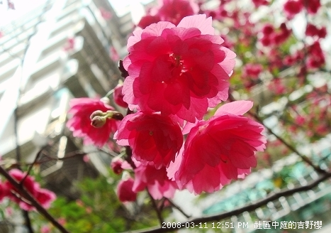 2008_03_11 020