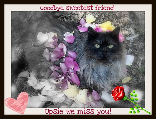 Goodbye our friend Upsie
