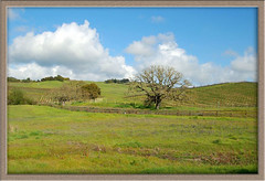 Wine Country (Steven P. Moreno) Tags: california travel food outdoors spring wine fineart country parks tourist napa sonomacounty cranepark penngrovecalifornia stevenmorenospix