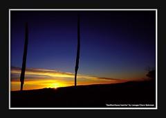 Xanthorrhoea Sunrise (Lenuge/ Dave Bateman) Tags: blackheath bluemountains grasstree xanthorrhoea hargraveslookout davebatemanphotography