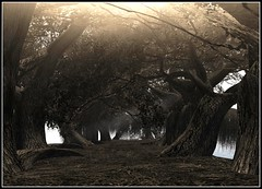 Darkwoods ( taken @ Silent) (Kracht Strom) Tags: art forest photography 3d screenshot woods poem silent sl secondlife untouched windlight kracht slwindlight theperfectphotographer viritual krachtstrom viritualworld purewindlight