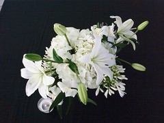 WhiteFlowers_By_SheilaCunningham