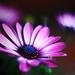 smena macro by second_color