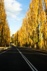 Tenterfield Rd (that sugars guy) Tags: road autumn trees sky rural canon point landscape 24105mmf4l bush highway glenn australia nsw avenue vanishing innes armidale tenterfield 400d newenglandhwy