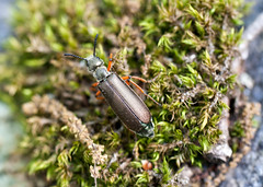 "C-Falls - beetle has landed • <a style=""font-size:0.8em;"" href=""http://www.flickr.com/photos/30765416@N06/5715022712/"" target=""_blank"">View on Flickr</a>"