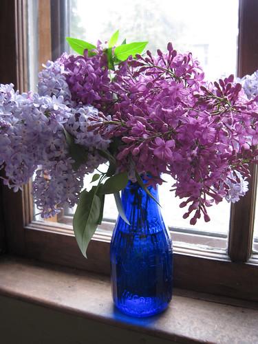 Lilacs 2